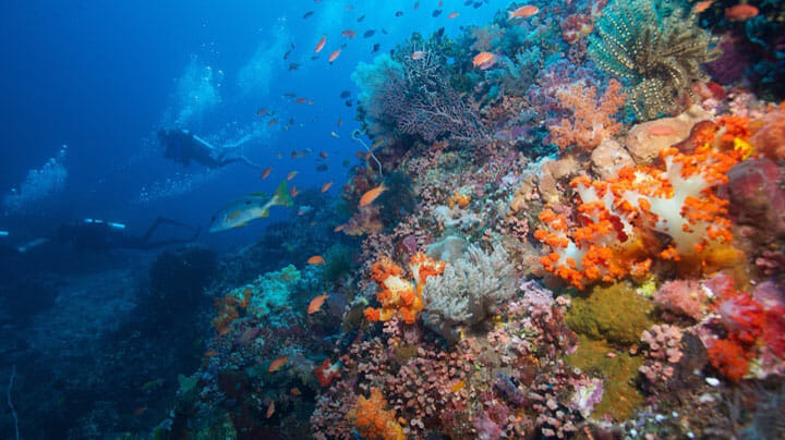 Indonesia diving coral